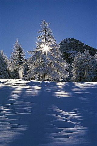 White-deal, Valle d'Aosta, Italy