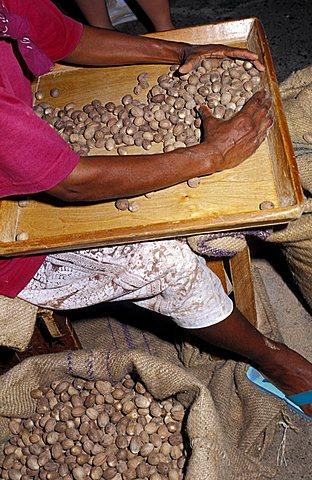 Cacao factory, Grenada island, Caribbean, Central America