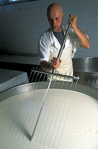 Preparation of Gorgonzola cheese, Paltrinieri Dairy, Prato Sesia, Piedmont, Italy