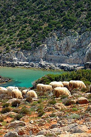 Cala Domestica creek, Buggerru, Sardinia, Italy, Mediterranean, Europe