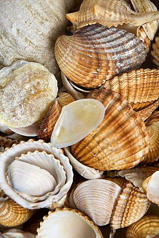 Shells, Genoa, Ligury, Italy