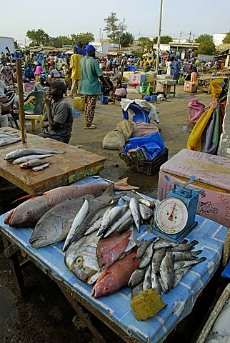 Fishmarket at port, M'Bour, Republic of Senegal, Africa