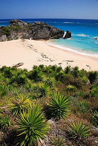 Horseshoe Bay, Bermuda, Atlantic Ocean, Central America