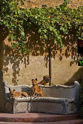 Dogs, Messina, Sicily, Italy, Europe