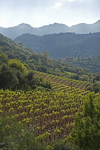Jerzu, Provincia di Ogliastra, Sardinia, Italy