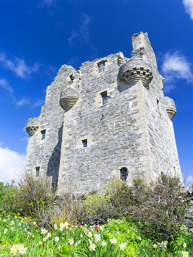 Scalloway Castle, landmark of Scalloway, the former capital of the Shetland Islands.  Europe, Great Britain, Scotland, Northern Isles, Shetland, May