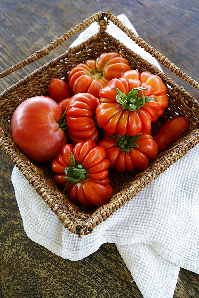 Organic fresh tomatoes, Umbria, Italy, Europe - 746-88604