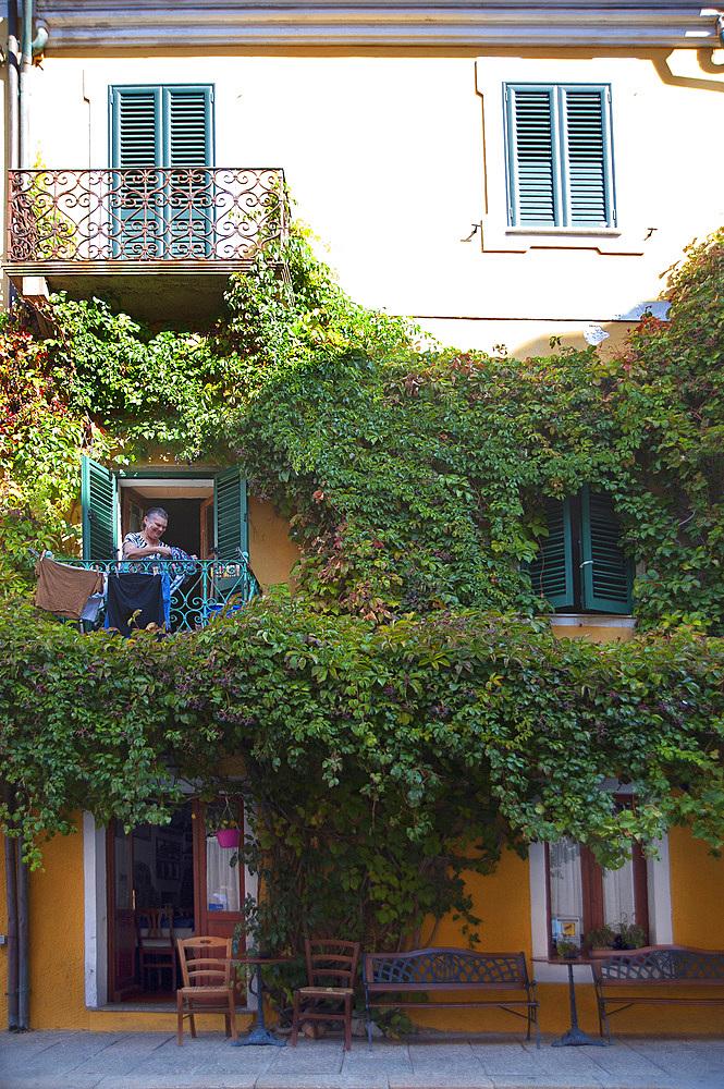 Parthenocissus quinquefolia, La Maddalena, Old Town, Sardinia, Italy, Europe