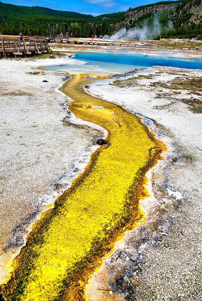 Creek and pool in Biscuit Basin, Yellowstone National Park, Wyoming.