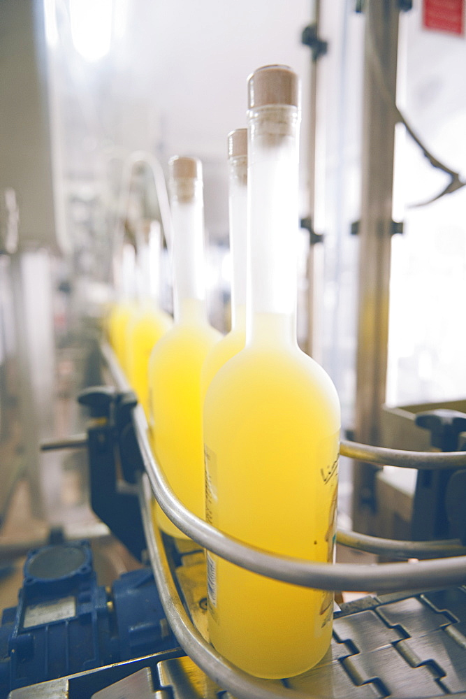 Production of traditional liqueur Limoncello in the distillery, laboratory and factory Il gusto della Costa, The taste of the coast owned by Valentino Esposito, Positano, Amalfi coast, Campania, Italy, Europe