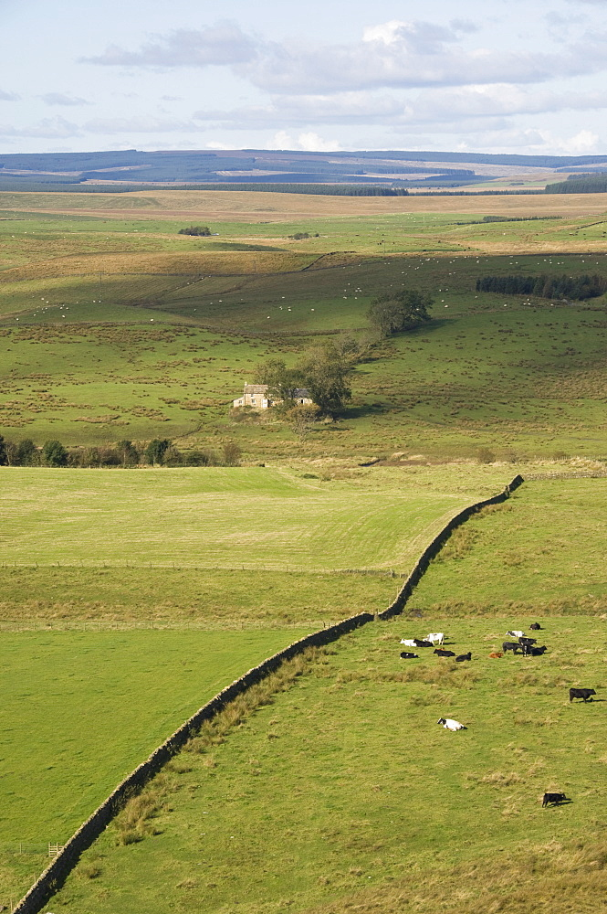 A view north from Crag Lough Heights to a Northumbrian farmstead, Hadrians Wall, UNESCO World Heritage Site, Northumberland, England, United Kingdom, Europe