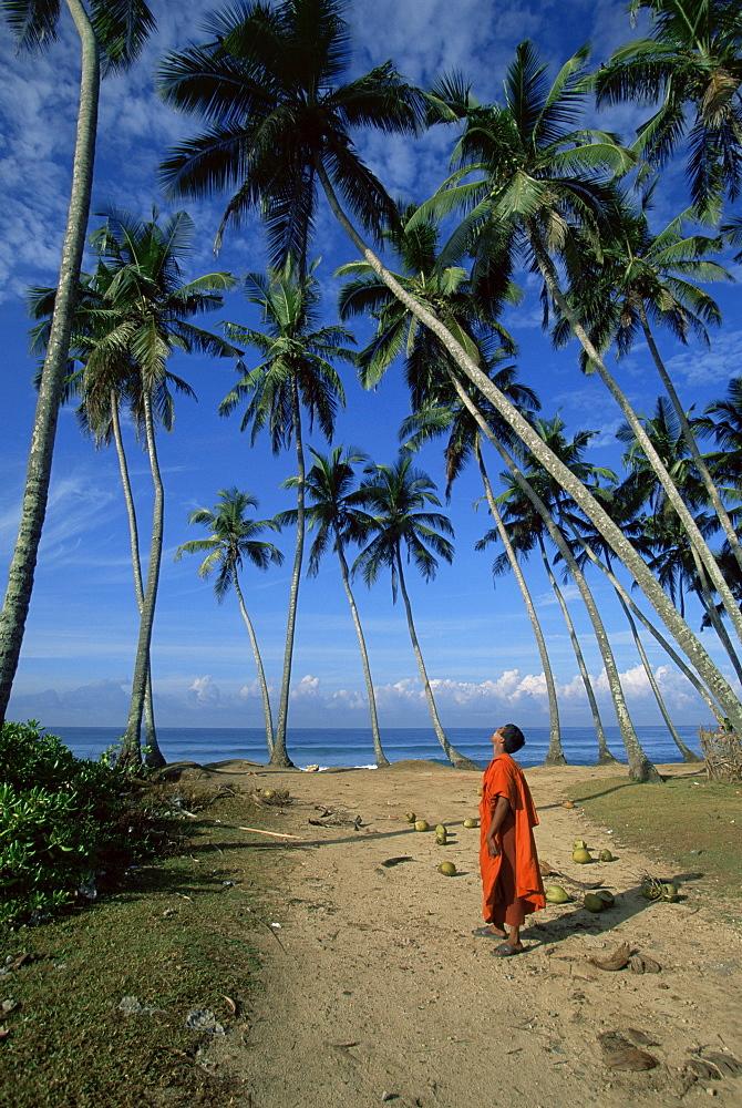 Buddhist monk looking up at palm trees between Unawatuna and Weligama, Sri Lanka, Asia