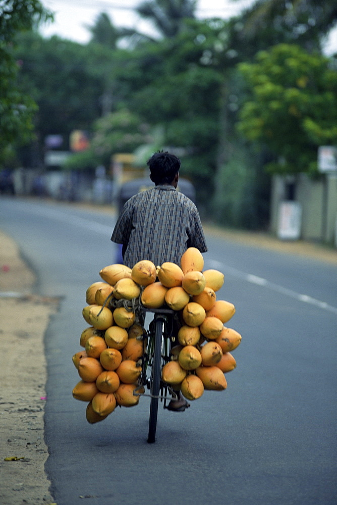 Man carrying coconuts on the back of his bicycle, Sri Lanka, Asia