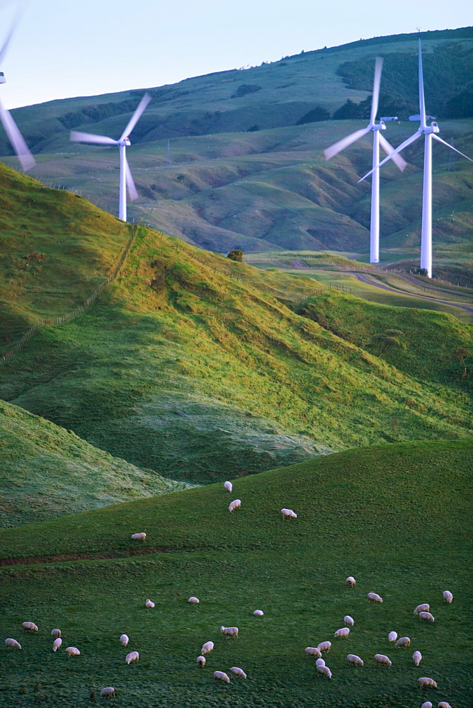 Te Apiti Wind Farm, Palmerston North, Manawatu, North Island, New Zealand, Pacific