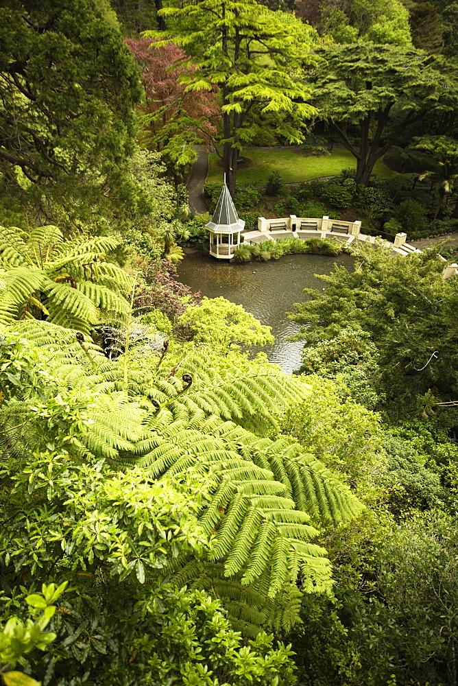 Tree ferns and Duck Pond, Wellington Botanic Garden, Wellington, North Island, New Zealand, Pacific