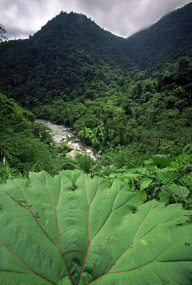Rio Grande de Orosi, Costa Rica, Central America - 757-100