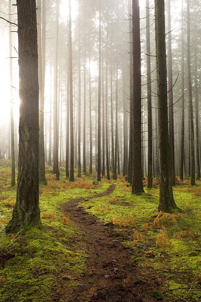 Trail through the woodland, Vashon Island, Washington State, United States of America, North America - 757-201