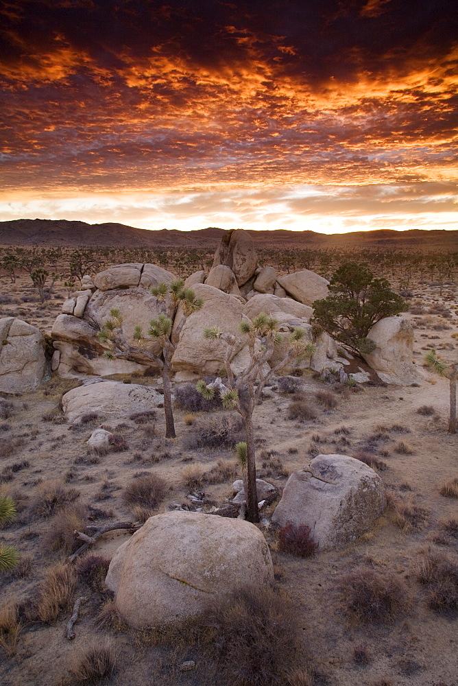 Landscape, Joshua Tree National Park, California, United States of America, North America - 757-218