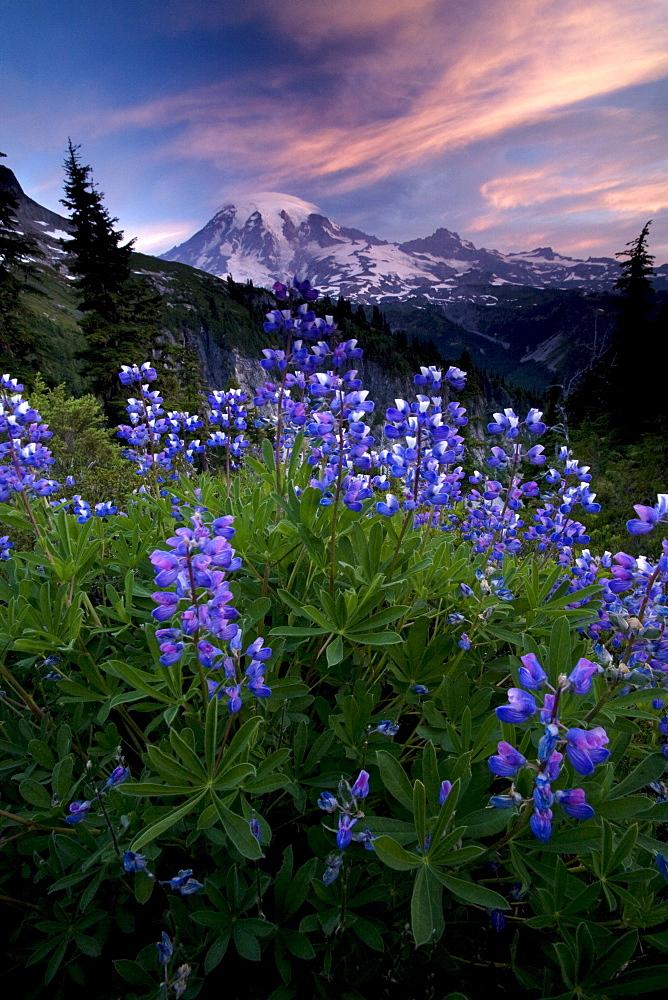 Landscape, Mount Rainier National Park, Washington State, United States of America, North America - 757-227