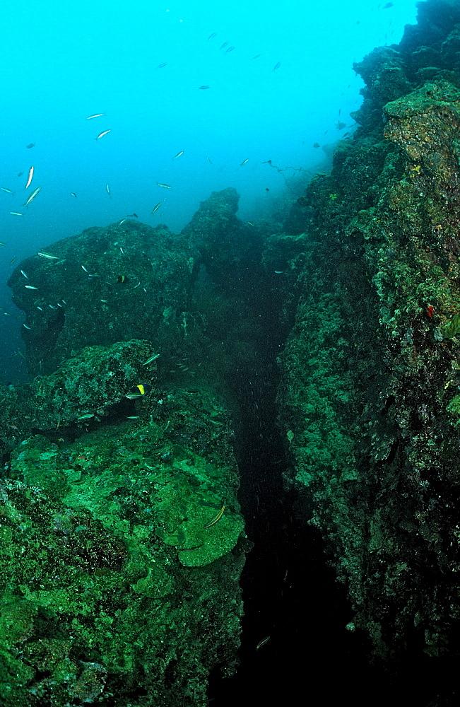 Tectonical rift underwater, Djibouti, Djibuti, Africa, Afar Triangle, Gulf of Aden, Gulf of Tadjourah