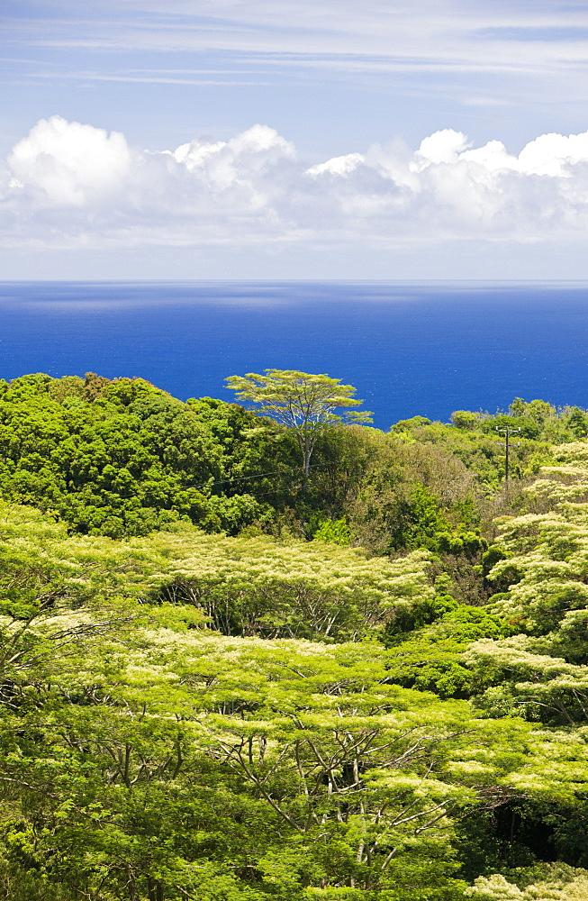 Vegetation at Road to Hana, Maui, Hawaii, USA