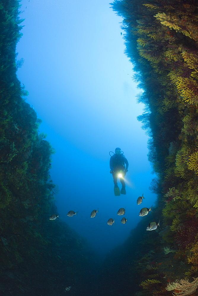 Scuba Diver over Reef, Tamariu, Costa Brava, Mediterranean Sea, Spain