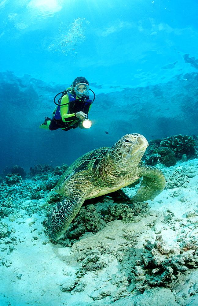 Green Turtle and scuba diver, Chelonia mydas, Malaysia, Pazifik, Pacific ocean, Borneo, Sipadan