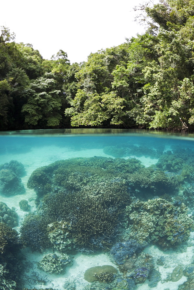 Corals in Risong Bay, Risong Bay, Micronesia, Palau