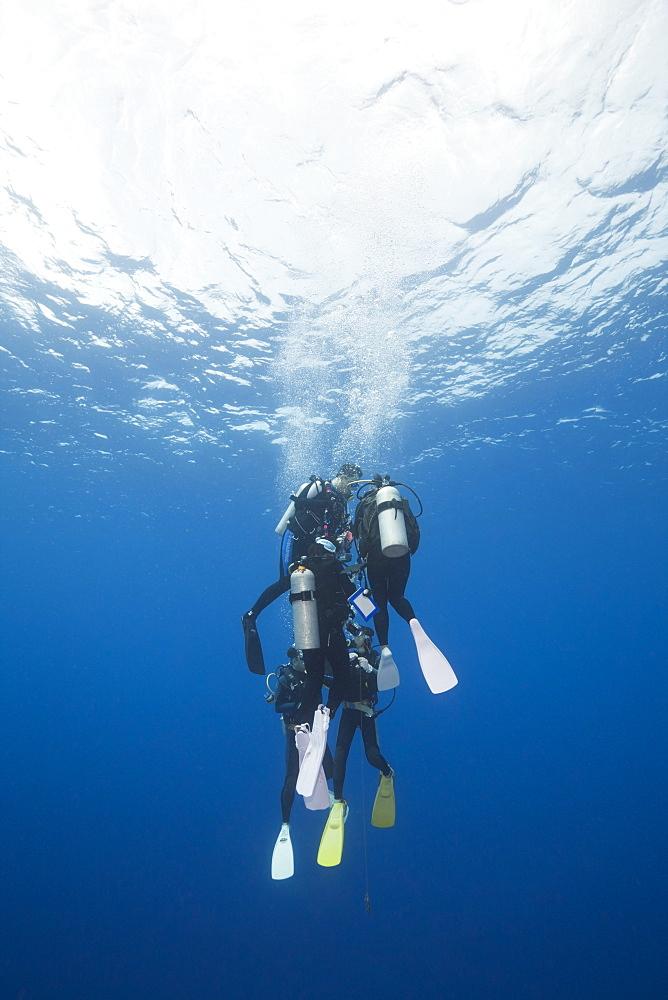 Diver doing Deco-Stop, Blue Corner, Micronesia, Palau