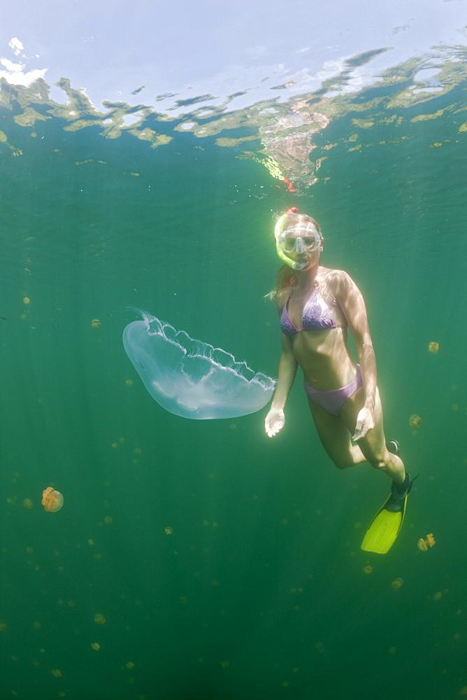 Moon Jellyfish and Skin Diver, Aurita aurita, Jellyfish Lake, Micronesia, Palau