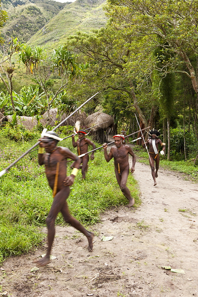 Warriors of Dani tribe, Baliem Valley, West Papua, Indonesia, Southeast Asia, Asia - 759-9254