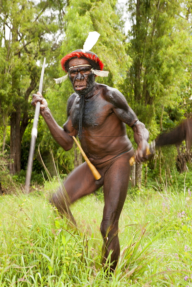 Warriors of Dani tribe, Baliem Valley, West Papua, Indonesia, Southeast Asia, Asia - 759-9260