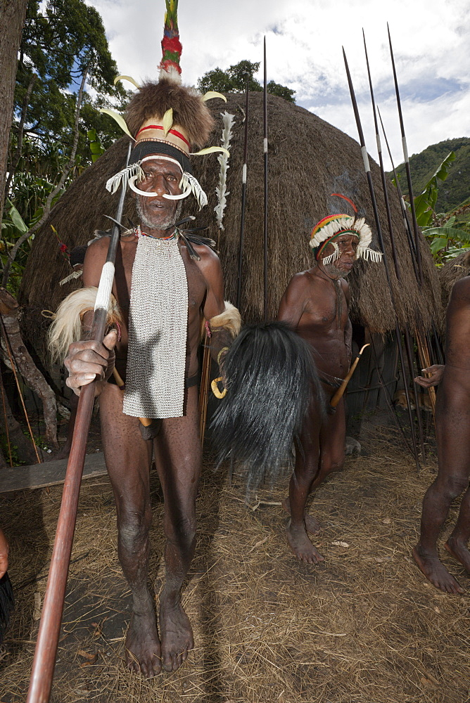 Warrior of Dani tribe, Baliem Valley, West Papua, Indonesia, Southeast Asia, Asia - 759-9273