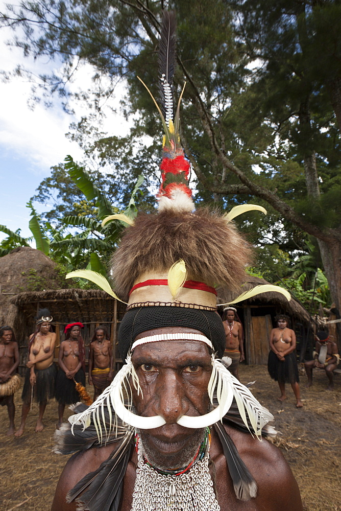 Warrior of Dani tribe, Baliem Valley, West Papua, Indonesia, Southeast Asia, Asia - 759-9278