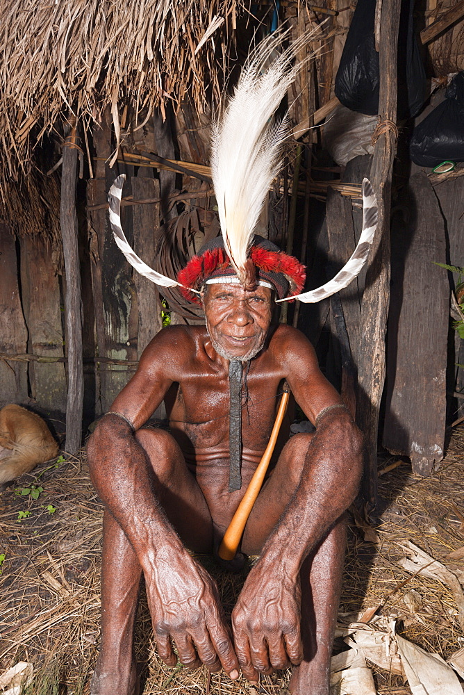 Warrior of Dani Tribe, Baliem Valley, West Papua, Indonesia, Southeast Asia, Asia - 759-9285