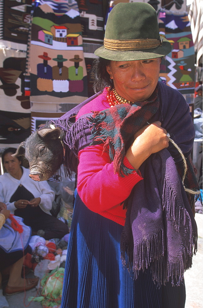 Otavalo, north of Quito is one of Latin Am's most famous markets for textiles, crafts and produce woman carrying a pig in her shawl, Quito, Ecuador