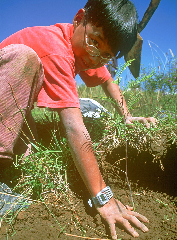 A young boy plants a seedling as part of a community reforestation project in the Highlands, Ecuador