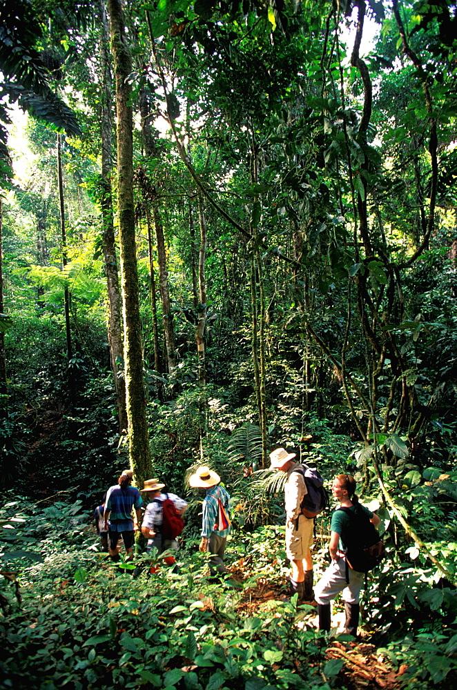 Amazon River Basin Napo River (Amazon tributary) down river at La Selva Jungle Lodge naturalists on path through primary rainforest, Oriente, Ecuador