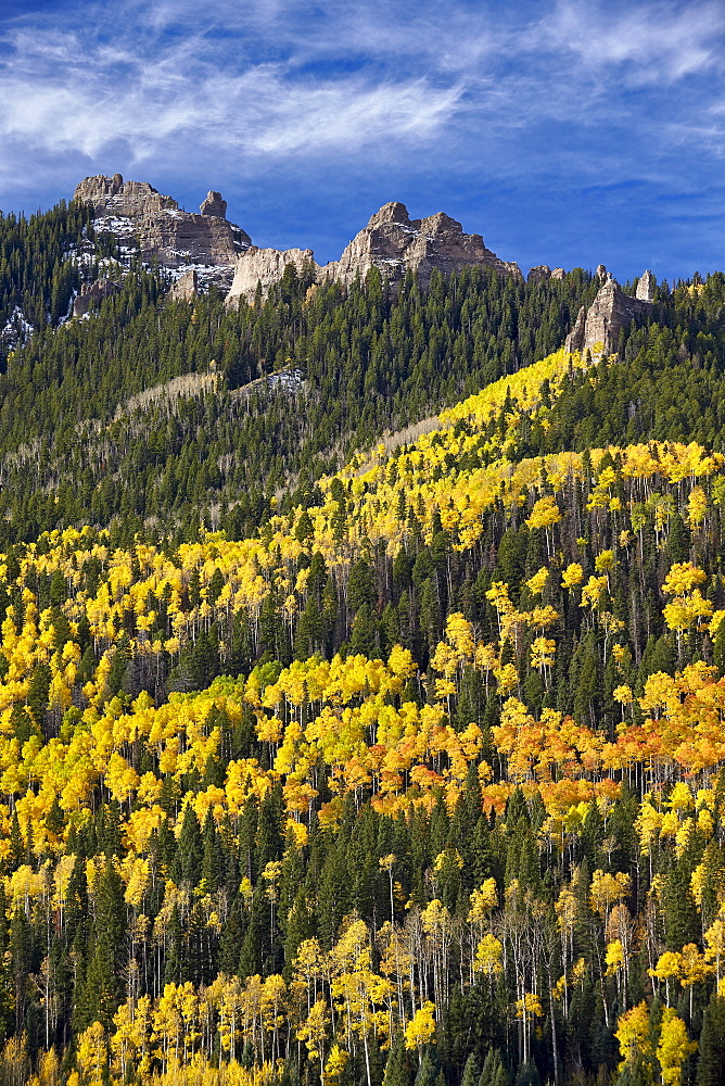 Yellow and orange aspens with evergreens in the fall, Uncompahgre National Forest, Colorado, United States of America, North America