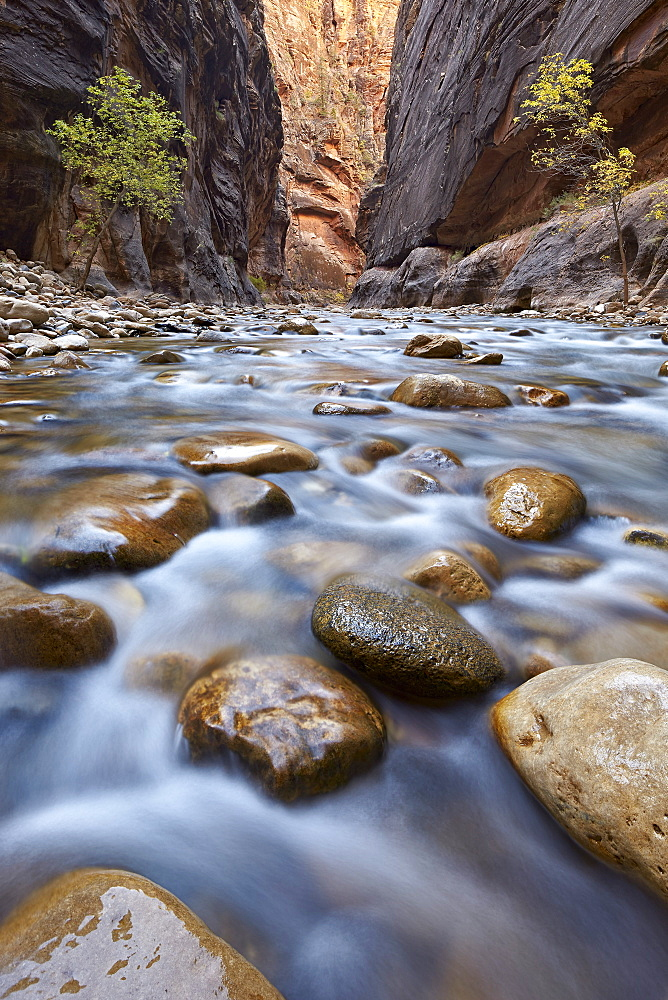 The Narrows of the Virgin River in the fall, Zion National Park, Utah, United States of America, North America