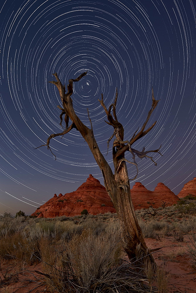 Juniper and sandstone cones under the stars, Coyote Buttes Wilderness, Vermilion Cliffs National Monument, Arizona, United States of America, North America