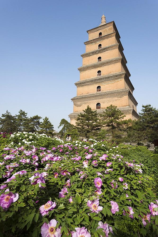 Giant Wild Goose Pagoda (Big Wild Goose Pagoda), Xi'an, Shaanxi Province, China, Asia - 767-1328
