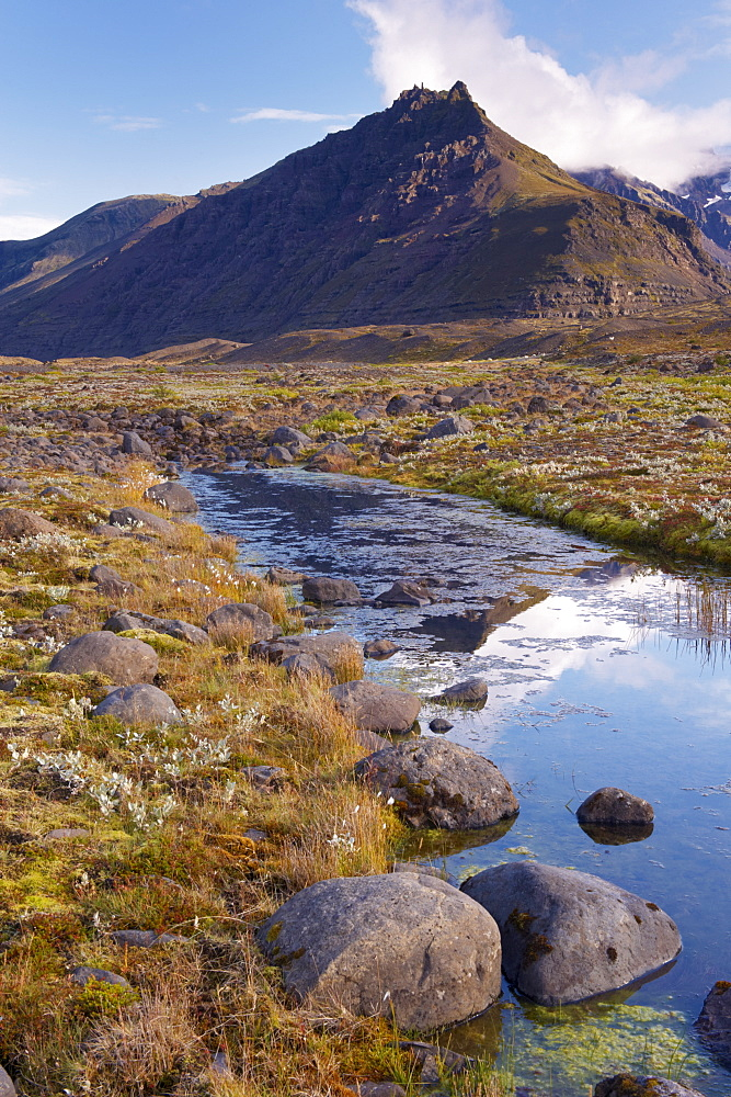 Arctic plants in autumn in Skaftafell National Park, Mount Hafrafell in the distance, south-east Iceland (Austurland), Iceland, Polar Regions - 770-1686