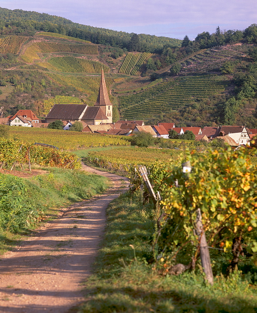 Niedermorschwihr, village of the Alsatian Wine Road, and its unique twisted bell tower, from the vineyards, Haut Rhin, Alsace, France, Europe - 770-1774