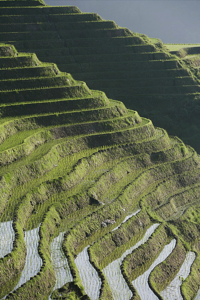 Longsheng terraced ricefields, Guangxi Province, China, Asia