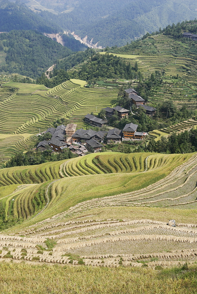 Longsheng terraced ricefields, Guilin, Guangxi Province, China, Asia