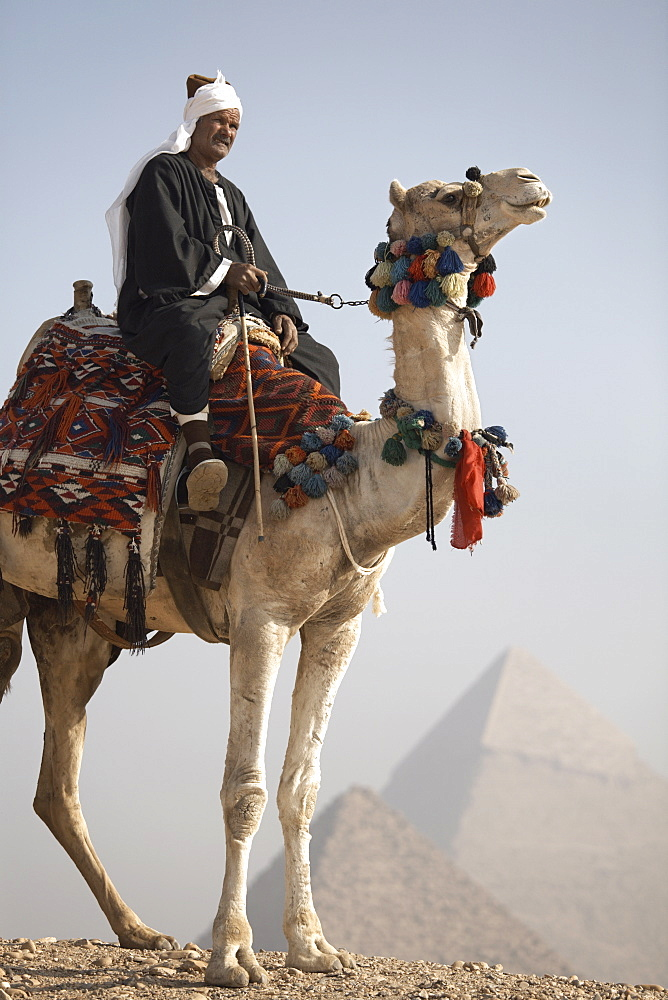 A Bedouin guide on camel-back overlooking the Pyramids of Giza, UNESCO World Heritage Site, Cairo, Egypt, North Africa, Africa