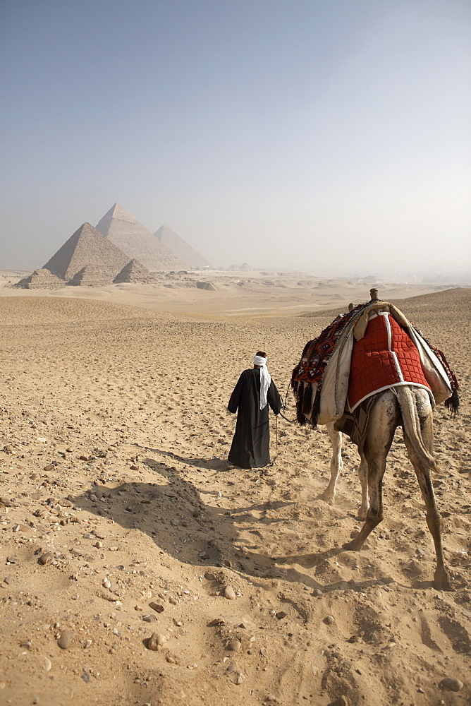 A Bedouin guide and camel approaching the Pyramids of Giza, UNESCO World Heritage Site, Cairo, Egypt, North Africa, Africa