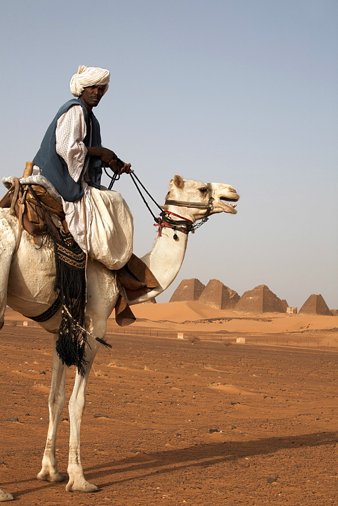 A guide and camel stand in front of the pyramids of Meroe, Sudan's most popular tourist attraction, Bagrawiyah, Sudan, Africa
