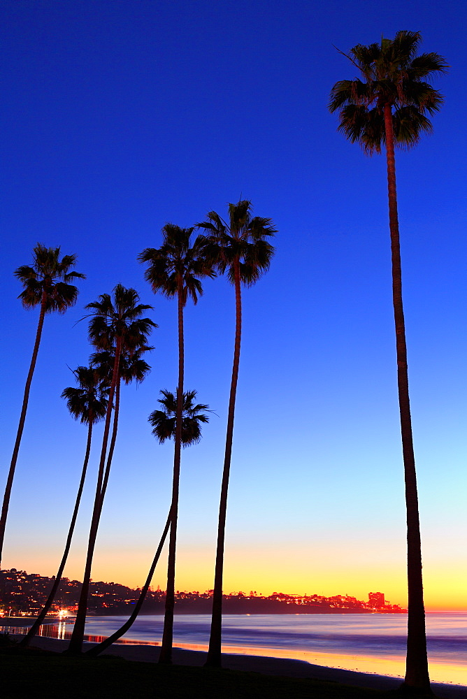 Palm trees, La Jolla Shores Beach, La Jolla, San Diego, california, USA
